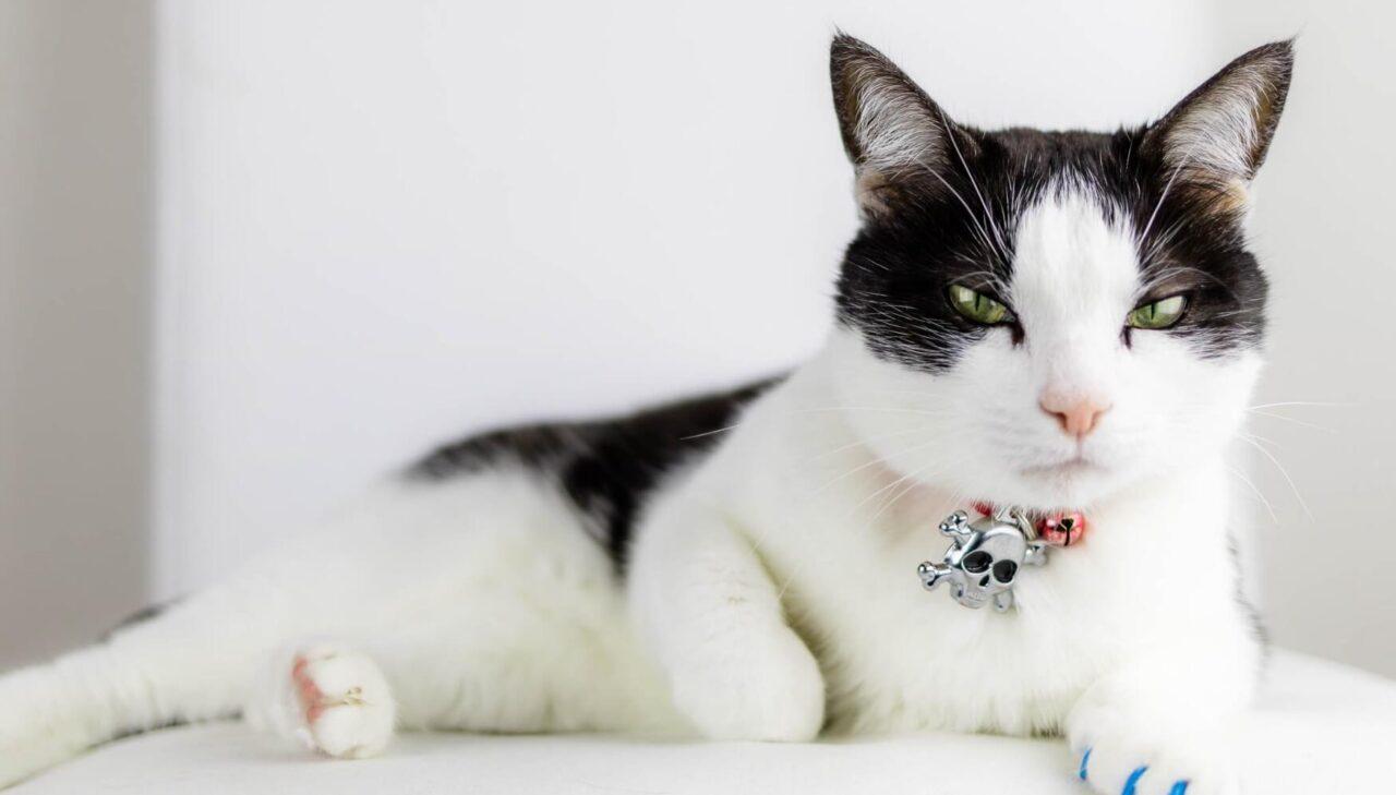 Kedi severe hediye