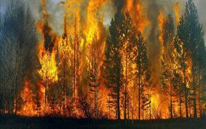 orman yangınları neden çıkar?